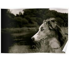 Lurcher On The Derwents Banks. Poster