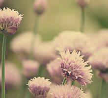 Vintage Chives III by Debbie-Anne Parent