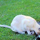 Thirsty kitty by missmoneypenny