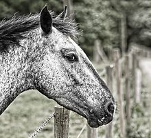 In Riding A Horse We Borrow Freedom by cameraimagery