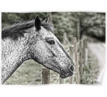 In Riding A Horse We Borrow Freedom Poster