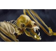 Bat Skeleton Photographic Print