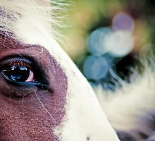 Horse by cameraimagery