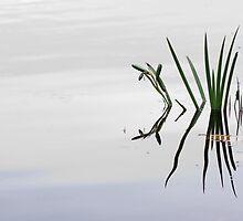 Minimalist Lone Reeds by Dannielle Levan