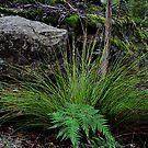 Bush Artistic Arrangement - Wynne's Rocks Mt Wilson NSW by Bev Woodman