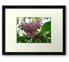 True blossoms Framed Print