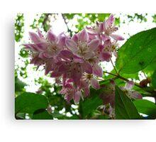 True blossoms Canvas Print