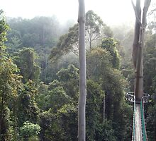 Danum Valley Canopy Walkway Tropical Borneo Rainforest  by HotHibiscus