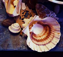 shells and things by califpoppy1621