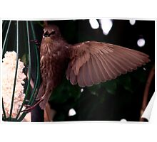 Bird On A WING Poster