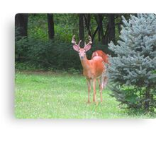 I've Been Spotted Canvas Print
