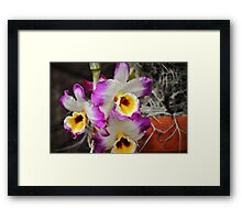 Blooming  Orchids Framed Print
