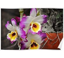 Blooming  Orchids Poster