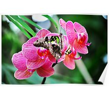Pink Orchids & Butterfly Poster