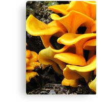 Who's Been Eating The Orange Delights?! Canvas Print