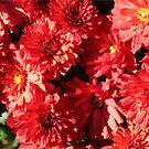 Blazing Red by shadyuk