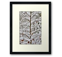 Tree branches covered in snow Framed Print