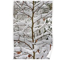Tree branches covered in snow Poster