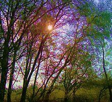 the shining by marysia wojtaszek