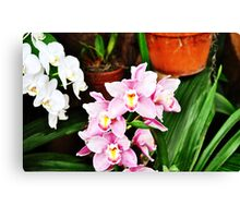 Orchid Sweetness Canvas Print