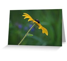 Sideview Beauty Featured Photo! Greeting Card
