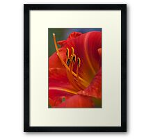 Burst of Orange Framed Print