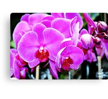 Cotton Candy Pink  Orchids Canvas Print