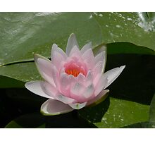 Water Lily With Sprinkles Photographic Print