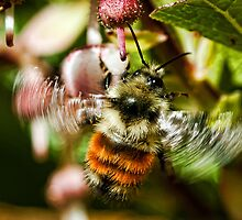 The World of Bees by David Friederich
