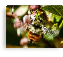 The World of Bees Canvas Print