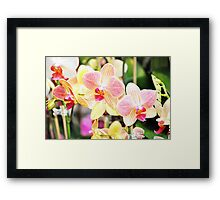 Sweet Pink Blooming  Orchids Framed Print