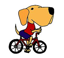 Funny Yellow Labrador Riding Bicycle Photographic Print