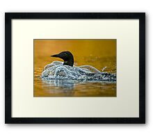 Bubbling Loon Framed Print