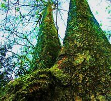 two tall trees by marysia wojtaszek