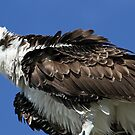 All puffed up! by jozi1