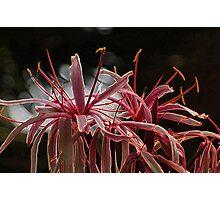 Flower Limbs Photographic Print