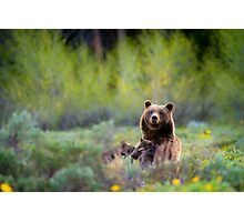 Grizzly Bear #399 Nursing Photographic Print