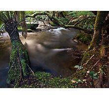 Meeting of the waters, Taggerty river Photographic Print