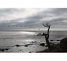 The Ghost Tree Photographic Print