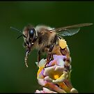 working bee by AndyPS