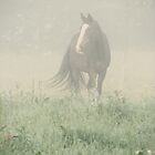 20.7.2011: Morning Mist Moment by Petri Volanen