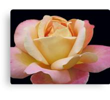 Gracious Rose Canvas Print