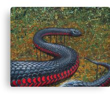 Red Bellied Black Snake Canvas Print