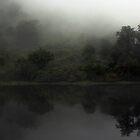 Fog in Doubtfull Sound by EblePhilippe
