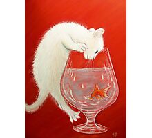 Chaton curieux!! Photographic Print