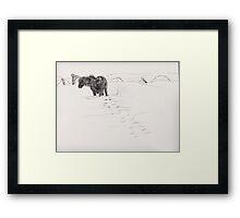 shetland pony in snow Framed Print