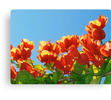 The Colours of Summer. Canvas Print