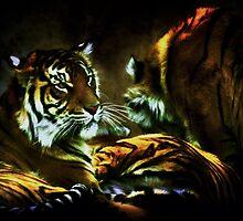 Tiger by Darren68
