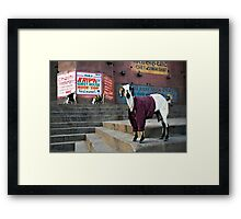 Woolly Jumper Framed Print