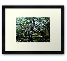 Power, connection and growth Framed Print
